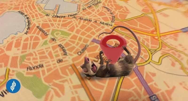 El algoritmo Google Possum toma su nombre del comportamiento de las zarigüeyas, que se hacen las muertas para evitar a los depredadores